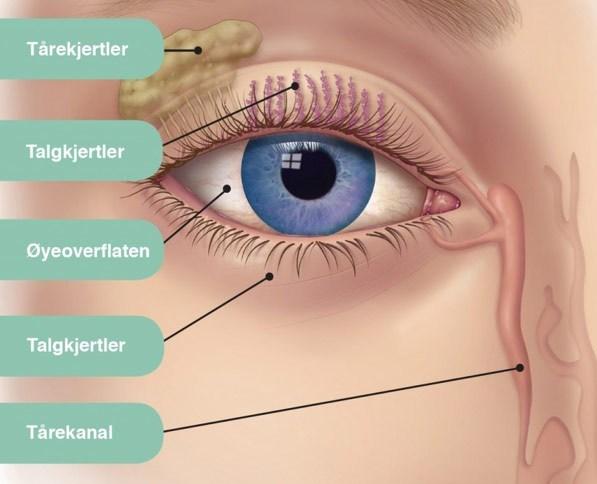 tørre øyne, talgkjertler, tårefilm, øyeoverflaten, tårekanal